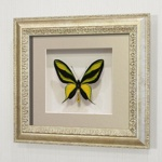 Бабочка Райская Птицекрылка, арт: 13с