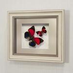 Бабочки Агриас Лугенс и Летающий Самоцвет, арт.: 72а