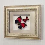 Бабочки Агриас Лугенс и Летающий Самоцвет, арт.: 72с