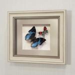 Бабочки Харакс Смарагдовый и Летающий самоцвет, арт.: 174а