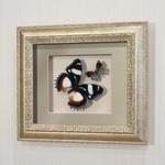 """Бабочки Французский триколор и """"Летающий самоцвет"""", арт.: 176с"""