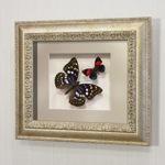 """Бабочки """"Японский Император"""" и Летающий Самоцвет, арт.: 178с"""