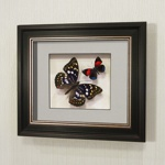 """Бабочки """"Японский Император"""" и Летающий Самоцвет, арт.: 178в"""