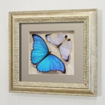 Бабочки Большая Морфо Влюбленных и Морфо счастья или Дидиус, арт: 47-53с
