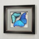 Бабочки Большая Морфо счастья и Морфо счастья Пелей, арт.: 51-53в