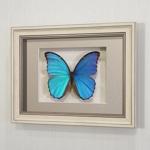 Бабочка Морфо счастья или Дидиус, арт: 53а