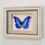 Бабочка Морфо Елена, арт.: 54а