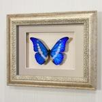 Бабочка Морфо Елена, арт.: 54с