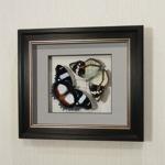Бабочки Французский триколор и  жемчужница Шренка, арт.: 70-76в