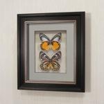 Бабочки Золотые белянки, арт.: 79в