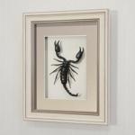 Гигантский королевский скорпион, арт.: Ск1а