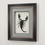 Гигантский королевский скорпион (большой), арт.: Ск0в